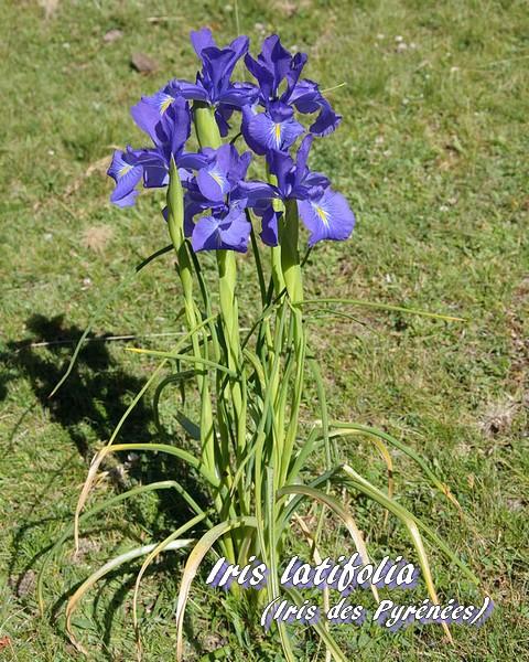 Site de rencontre iris